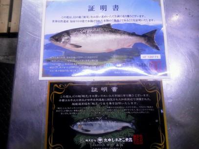幻の鮭「鮭児」入荷!